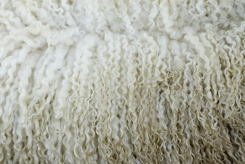 Sheep's Wool 354 (Free Texture) | by shallowend