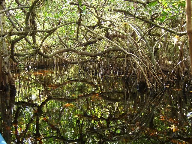 turner river november 1, 2008 051