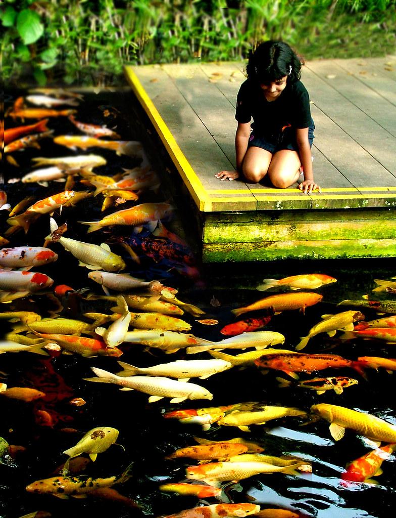 Fish aquarium in sri lanka -  Party Time Golden Fish Pond By Chinthaka Sri Lanka