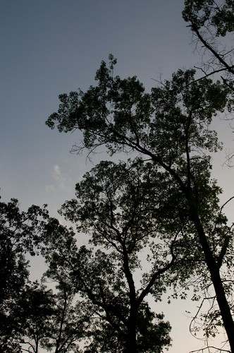 Trees at dusk | by A. Blight
