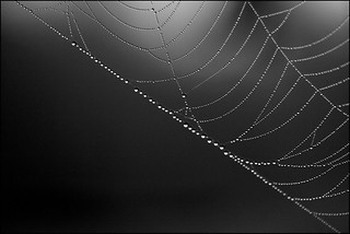 web drops | by *Melody*