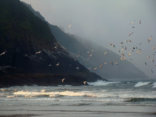 Oregon Coast | by gerihatric