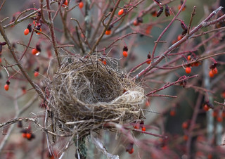 empty nest | by Muffet