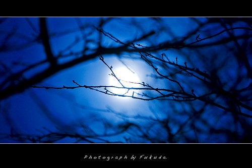 Silent blue night | by Fukuda.