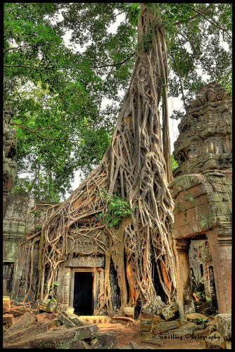 Ta Prohm Temple, Siem Reap Cambodia | by Shot & Framed