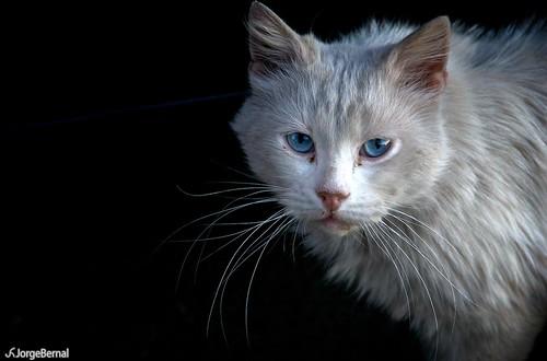 Blue Cat White Bunny
