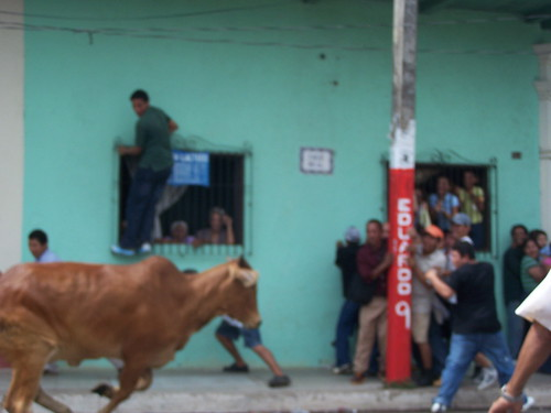 Bull Running, Granada, Nicaragua | by The Hungry Cyclist