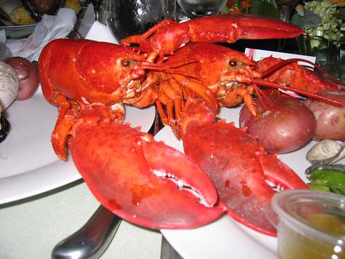 free porn lobster