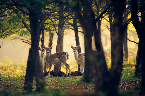 we're trying to hide! | by andrew evans.