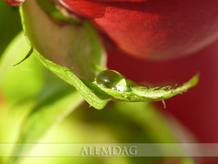 drop | by alemdag
