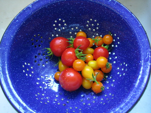 Summer Tomatoes | by Earthworm