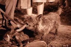 Toto Dog Rescue