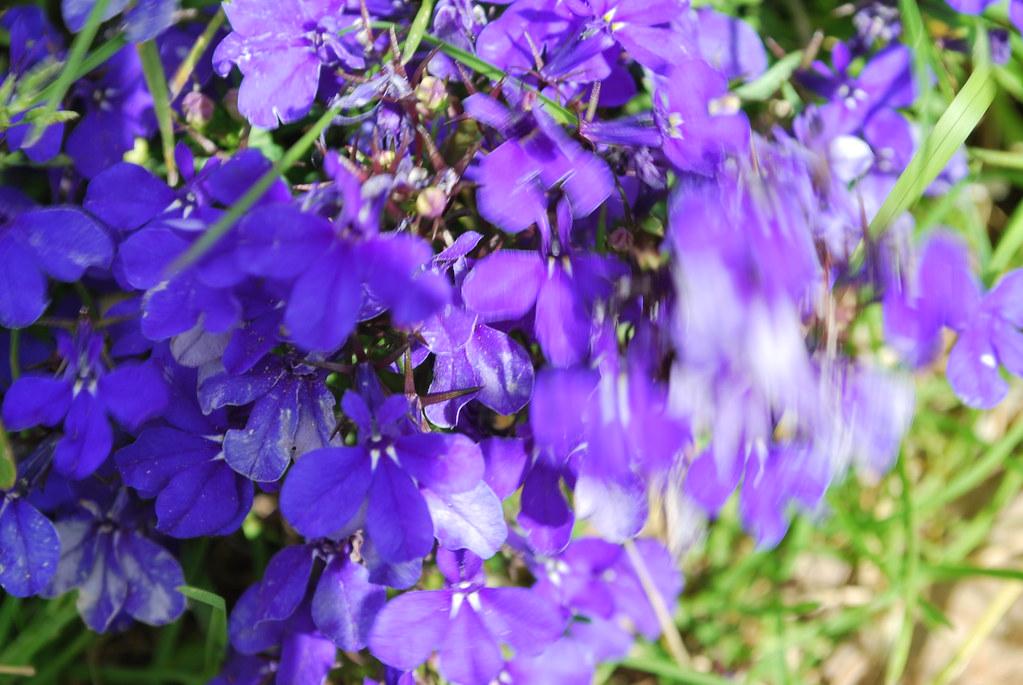 Flores En Movimiento R I O M A N S O Flickr