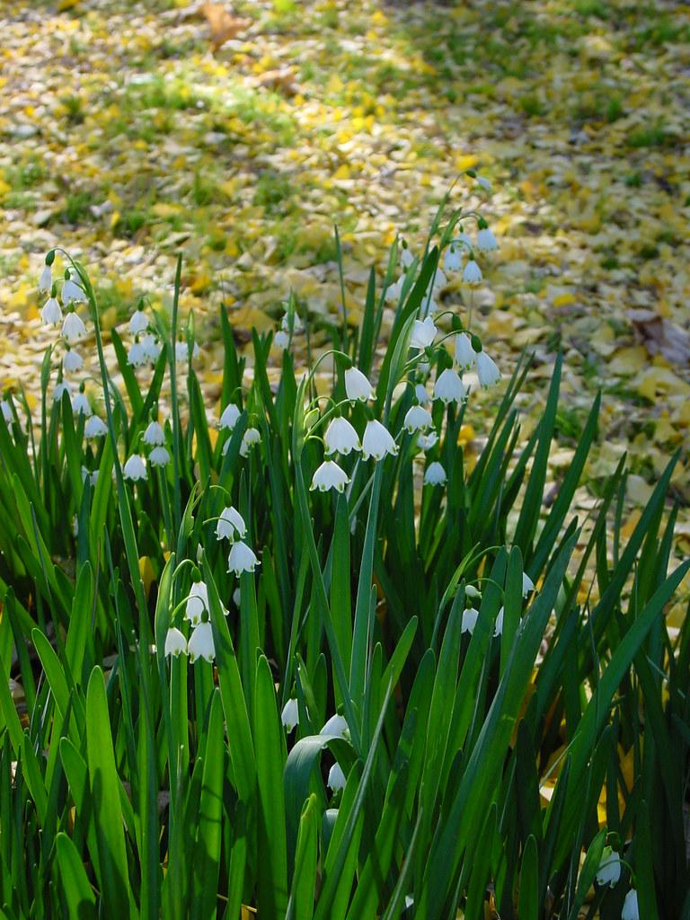 Uc Riverside Botanic Garden Flickr
