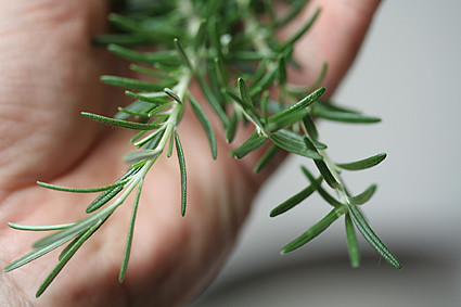 handful of rosemary | by David Lebovitz