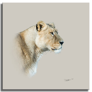 Portrait of a Lioness | by SallyT.