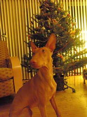 Bubba's first Christmas | by Brad Stabler