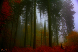 Fairy tale forest | by jmb_germany