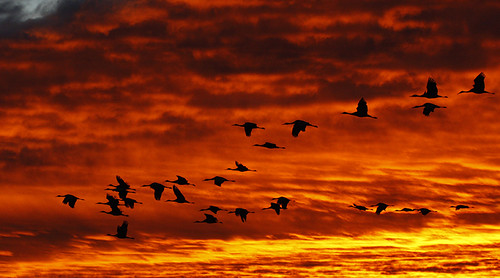 Cranes and SUNRISE | by howardpennphoto