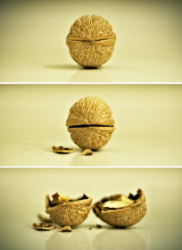 The walnut's death - La morte della noce | by Giulia Torra