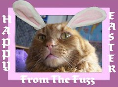 Fuzz The Easter Bunny | by Yvonne in Willowick Ohio