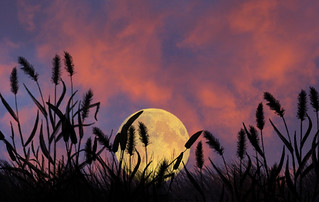 moon without bird | by Luz Adriana Villa A.
