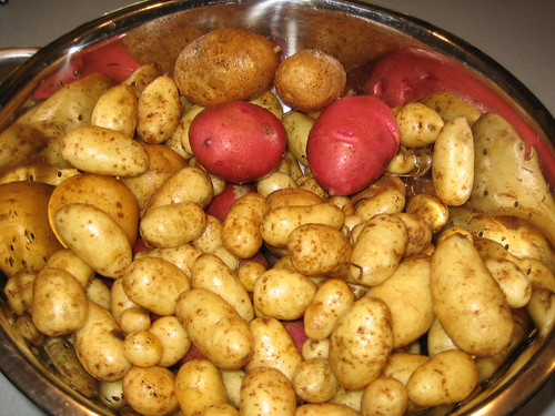 garden fingerling potatoes | by celticjig1