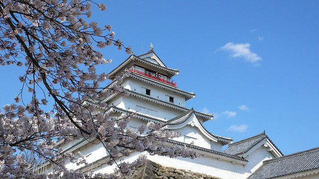 Tsurugajyo castle, Aizu-Wakamatsu in full cherry blossom season