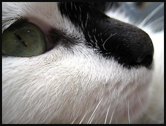 Such a cute black nose! | by Lulu-belle Ramsbottom...cant wait for christmas!
