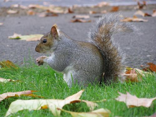 Come si dice scoiattolo in inglese cos pi gente clicca - Come si dice bagno in inglese ...