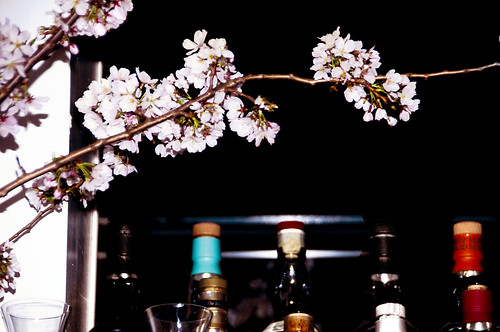 cherry blossoms at the bar | by paulaloe