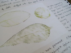 hapa zome leaf print | by drawing words