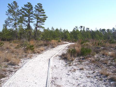 Scrub Trail