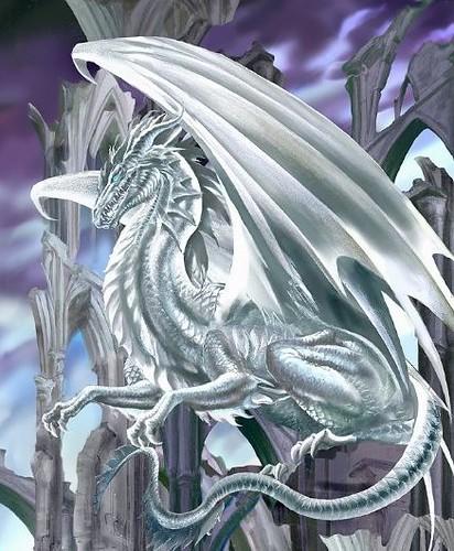 white dragon name white dragon draco uncia size male flickr