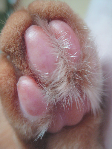 Pete's perfect pink paw! | by mamaroo10 ~~Have a nice day!!! ;-))