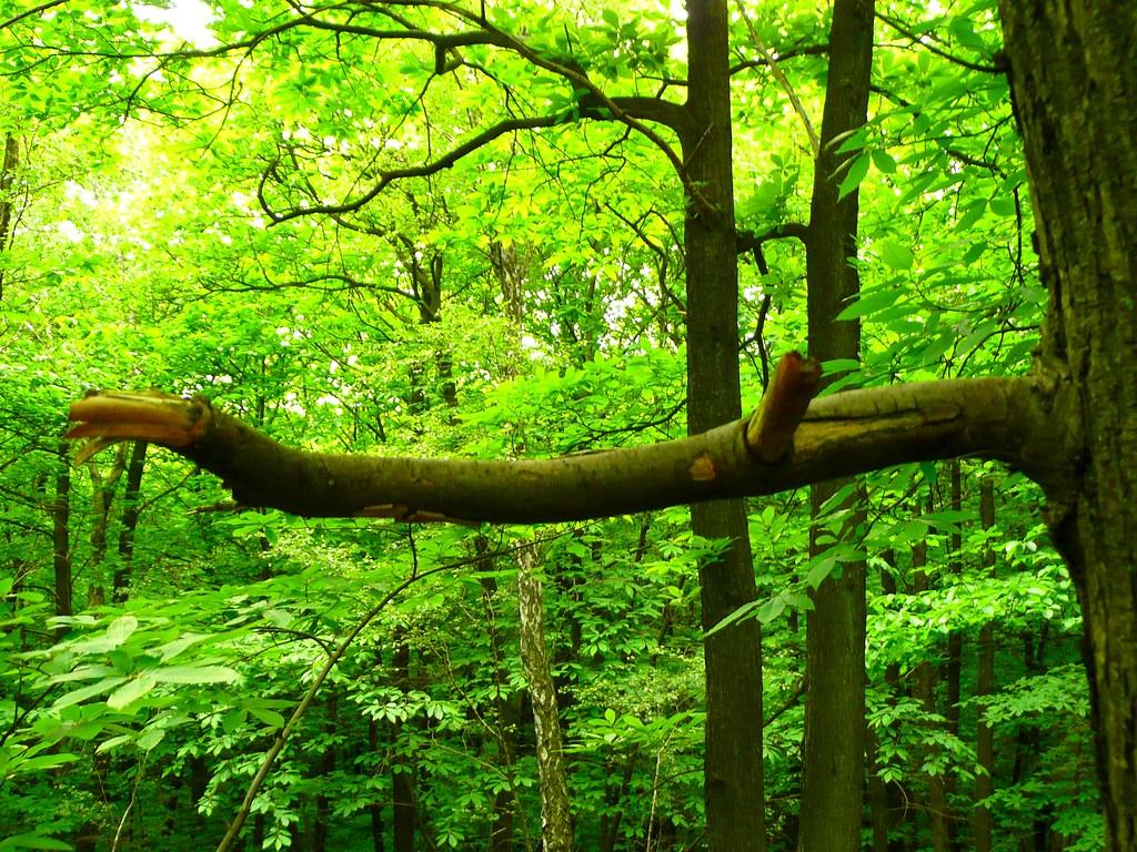 Connu Branche d'arbre cassée dans la forêt | benoit theodore | Flickr UX75