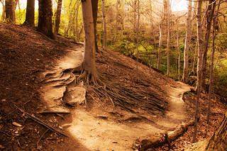 Two roads diverged in a wood, and I— | by swimparallel