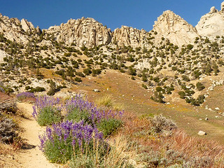 "Lupine Trail to Owens Peak -- For Kathy with ""Green Blessings"" 