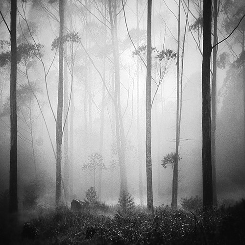 Forest Dream | by Hengki Koentjoro