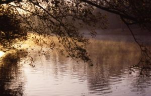 Lakeside | by Harewood House