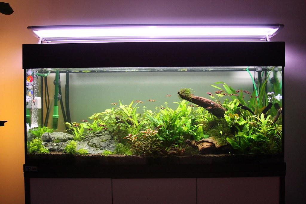 ... Aquarium 240L Arcadia OT2 Light | By Viktorlantos
