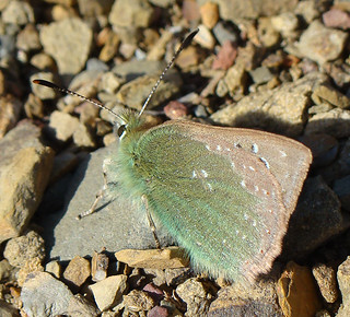 Borboleta // Provence Hairstreak (Tomares ballus) | by Valter Jacinto | Portugal