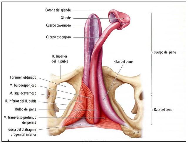 PN | Hoy, más de uno se ha quejado en clase de anatomía. Es … | Flickr