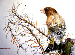 Birds 0362 Watercolor-Sketch | by sia.yekchung 谢一春