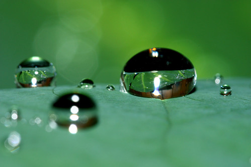 Big Brother Drop Is Watching: Paranoia Amongst Rainforest Droplets | by curious_spider