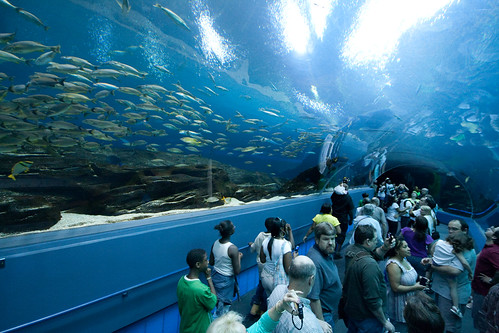 Atlanta Aquarium Tunnel | by @HandstandSam