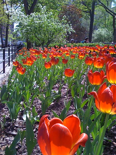 Washington Square Park, April 2009 | by jebb