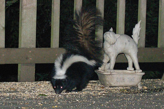 skunk & cat | by Contra Costa Times