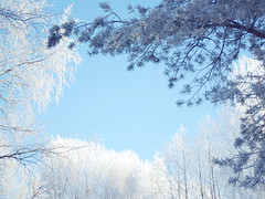 Snowy branches | by ♥ Moa Maria