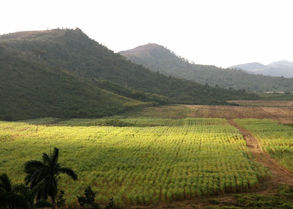 Sugar Cane Field Valle De Los Ingenios Cuba
